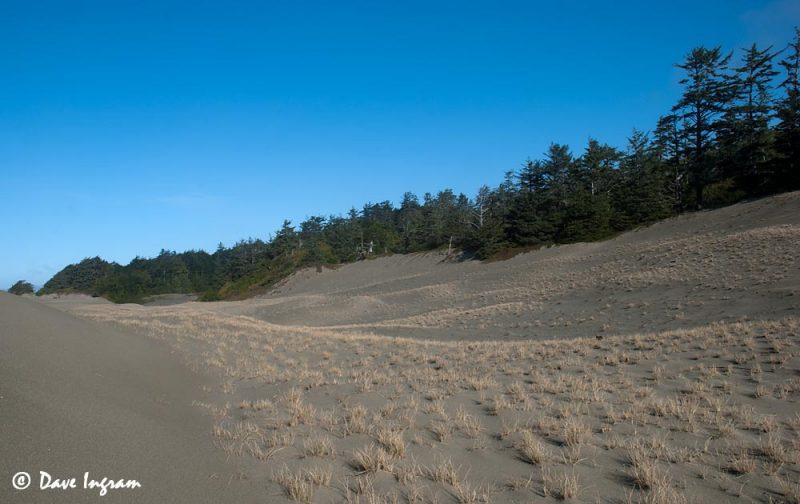 Wickaninnish Dunes #2