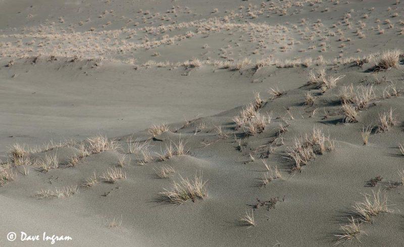 Wickaninnish Dunes #3