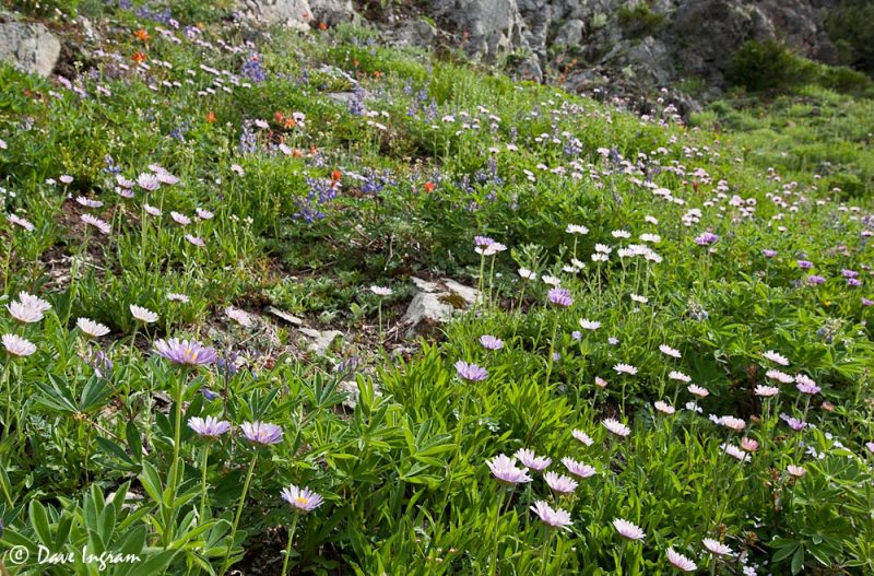 Meadow at Mount Arrowsmith