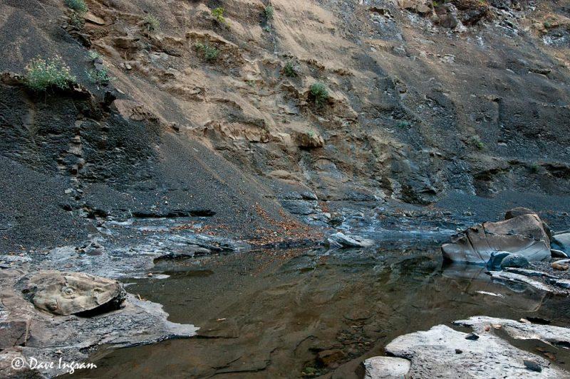 Trent River Shale Cliffs