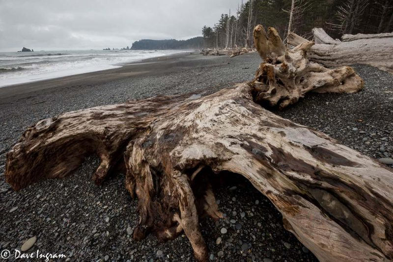 Rialto Beach Remains