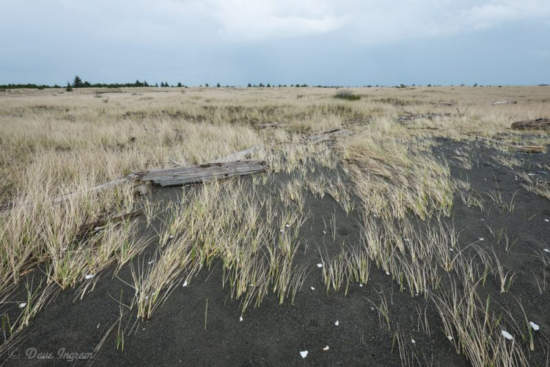 Edge of Grass and Sand