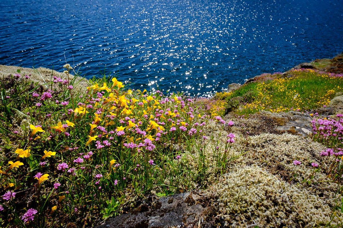 Wildflowers at Comox Lake Bluffs
